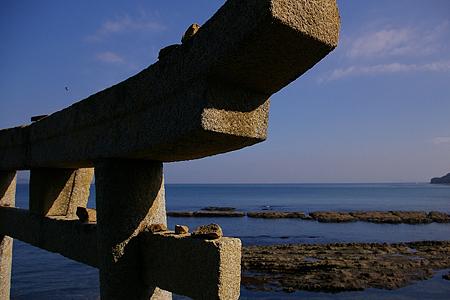 海のトリイとトンビ(無理矢理)