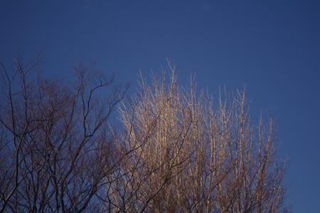 クリーミーブルーな正月の空