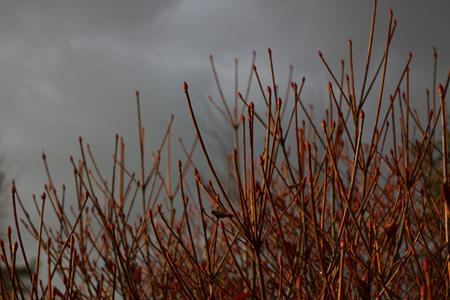 強い冬型の気圧配置。もう春の準備は始まっている。