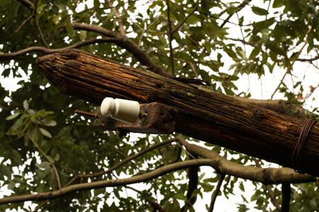 朽ちた電柱。殉死する碍子は白さを保っている。