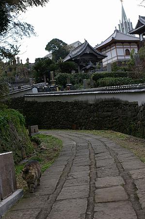 寺院と教会とのら猫の見える風景