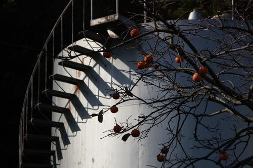 hikoshima12