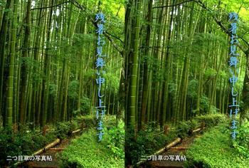 stereo/bamboo