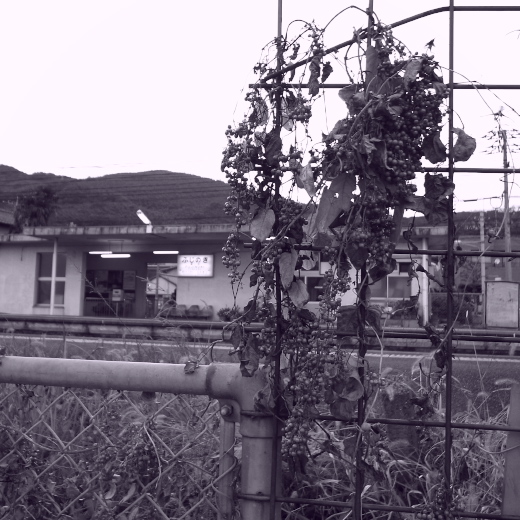 Fujinoki04