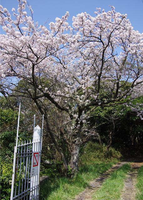 Yofukuji20110409_01