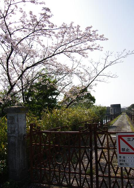 Yofukuji20110409_07