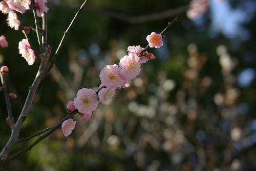 Dazaifu200706